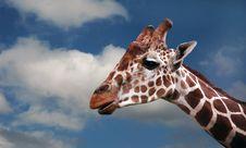Free Giraffe`s Head Stock Photography - 9847952