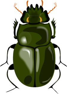 Free Big Beetle Stock Photography - 9848092