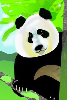 Free Panda On The Tree Royalty Free Stock Photography - 9848187