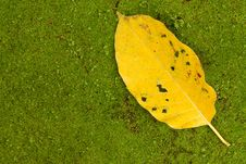 Free Falling Leaf On Mossy Ground Royalty Free Stock Photography - 9849567