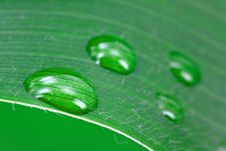 Free A Green Leaf With Water Drops Stock Photo - 9849600