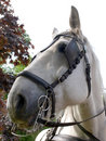 Free Portrait Of A Horse Royalty Free Stock Photography - 9852287