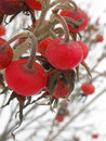 Free Frozen Berries Royalty Free Stock Images - 9856129