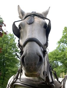 Free Horse Muzzle Stock Photography - 9852252