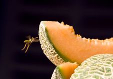 Free The Wasp And The Melon Royalty Free Stock Images - 9852649