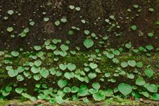 Free Small Plants On Mossy Ground Stock Image - 9852711