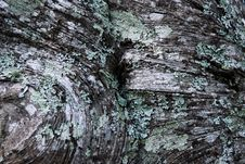 Free Lichen Royalty Free Stock Photos - 9853578