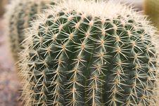 Tropical  Cactus Royalty Free Stock Photos