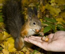 Free Squirrel Stock Image - 9854461
