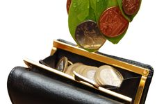 Green Leaves With Coins Stock Images