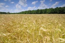 Free Summer Field Stock Photography - 9854632