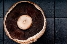 Free Portabella Mushroom Cap On A Black Background Royalty Free Stock Images - 9856489
