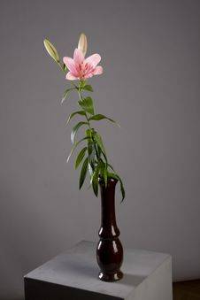 Free Pink Lily Royalty Free Stock Images - 9858979