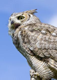 Free Eagle Owl Stock Photos - 9859923