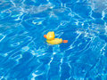Free The Duckling In Water Stock Images - 9862214