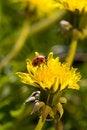 Free Ladybug Stock Photos - 9866413