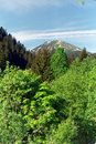 Free Peak Over The Forest Stock Images - 9867824
