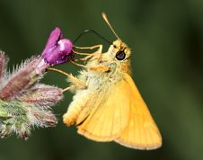 Free Wonderful Yellow Butterfly On Flower Stock Photos - 9863663