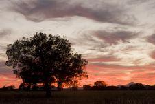 Free Sunrise Tree Silhouette Stock Photo - 9864010