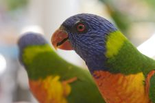 Rainbow Lorikeet 2 Stock Photos