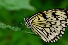 Butterfly5 Stock Photography