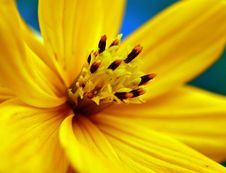 Free Closeup Of A Yellow Flower Royalty Free Stock Photos - 9864778