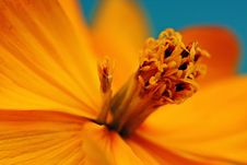 Free Closeup Of An Orange Flower Stock Images - 9864794