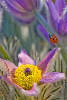 Free Fine Blue Flowers And Ladybug Stock Photo - 9866560