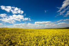Free Yellow Field Royalty Free Stock Photo - 9867545