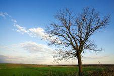 Free Single  Tree Stock Photo - 9867940