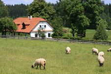 Free Cottage And Sheep Stock Photos - 9868123