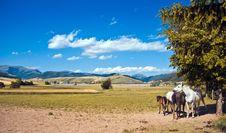 Free Family Horses Royalty Free Stock Photo - 9868925