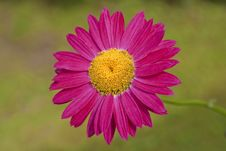 Free Red Gerbera Royalty Free Stock Photos - 9869008