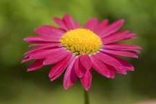 Free Red Gerbera Stock Image - 9869041