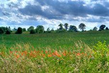 Free Poppy Field Stock Photos - 9869503