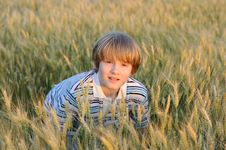 Free Boy At The Wheat Field Royalty Free Stock Photography - 9869597