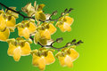 Free Beautiful Orchid On Green Stock Image - 9876401