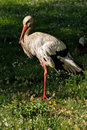Free Stork Royalty Free Stock Images - 9879809