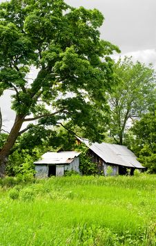 Free Run Down Barn In The Overgrowth Royalty Free Stock Images - 9870299