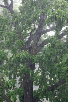Free Torrential Rain Royalty Free Stock Image - 9872846