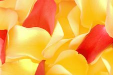 Rose Petals Background Royalty Free Stock Photos