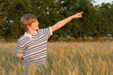 Free Boy At The Wheat Field Royalty Free Stock Image - 9874396