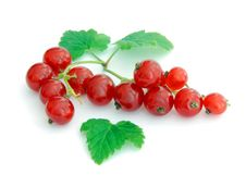 Free Red Currant Stock Photos - 9875403