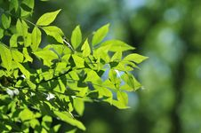 Free Green Leaves Stock Image - 9876591