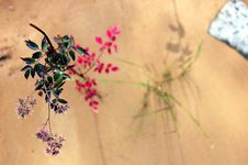 Free Sand And Flowers Stock Image - 9877651