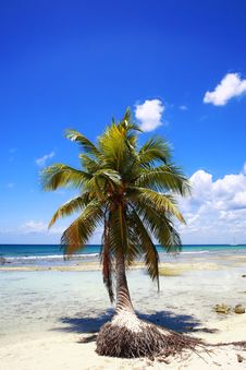 Free Palm Tree On Beach Royalty Free Stock Image - 9877716