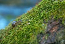 Free Snail Royalty Free Stock Images - 9878409