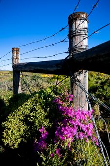 Barded Fence Royalty Free Stock Photos