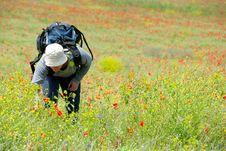 Happy Hiker On A Poppy Field Royalty Free Stock Image