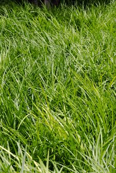 Free Long Grass Royalty Free Stock Image - 9878966